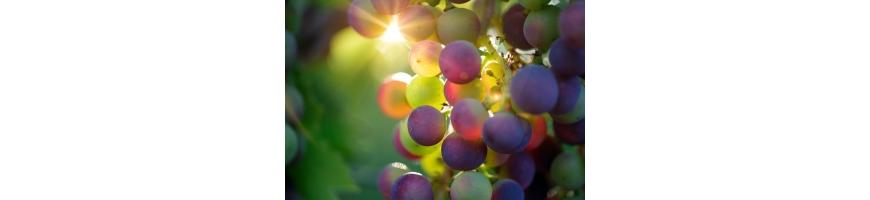 Les vins japonais - Toulouse Saké Club
